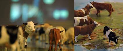 MilkedDry_cows
