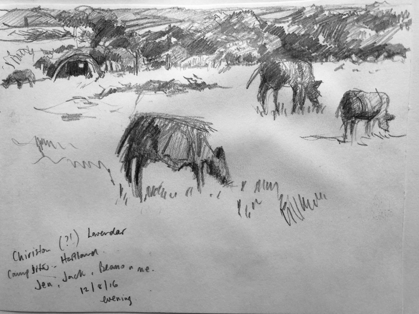Some of Jane Hodgson's drawing spanning over 20 years